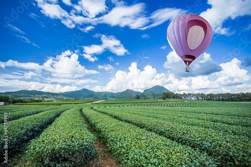 Deurstickers Ballon Hot air balloon over tea plantation with blue sky background