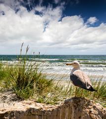 Strand mit Möwe :)