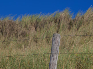 Rustic wire fence with tall grass
