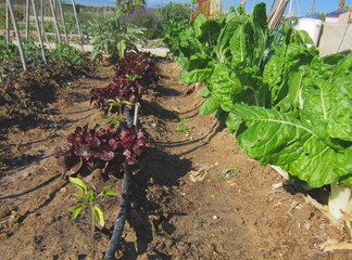 vegetable garden with crop mix