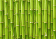 green bamboo background - 64746574