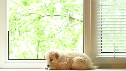 Puppy lying on near the window and looks around
