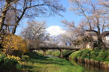 富士山 忍野にて