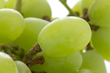 Detail of Thompson seeless grapes