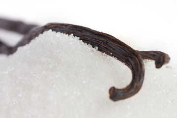 Detail of a vanilla pod resting in white sugar