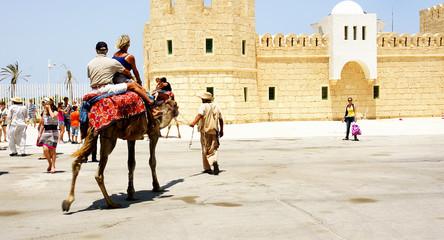 Camellos para turistas en el puerto de La Goulette, Túnez