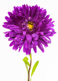 aster isolated
