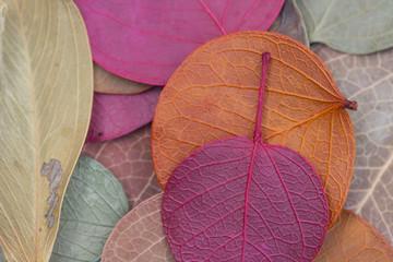 Textura de folhas