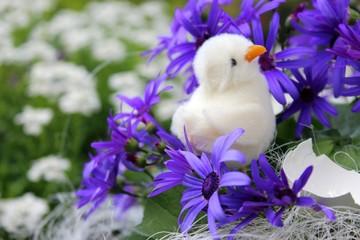 kücken und aschenblume