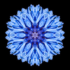 Blue Mandala Flower Kaleidoscope Isolated on Black