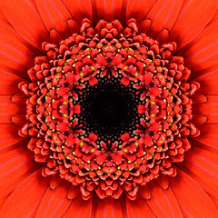 Red Concentric Flower Center Mandala Kaleidoscopic design