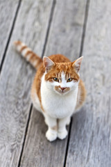 Cute cat observing the photographer