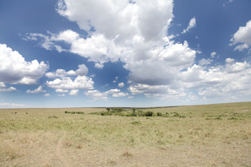 Dramatic cloud & vast grassland of Masai Mara National Park