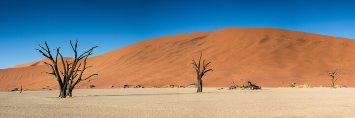 Panorama of the Dead Vlei
