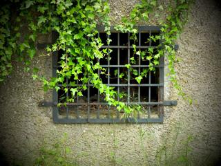 Defektes Fenstergitter