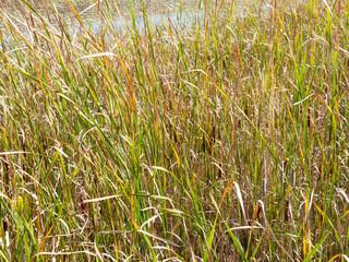 Swamp with lush vegetation