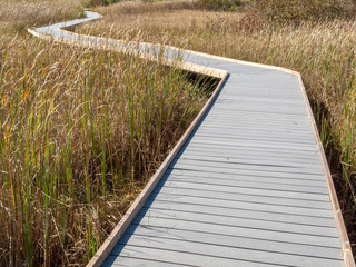 Boardwalk through marsh reeds