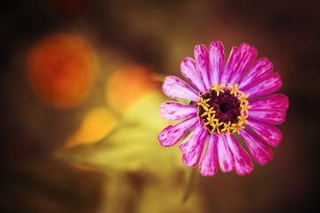 summer flower closeup