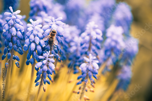 canvas print picture blue spring flowers with bee