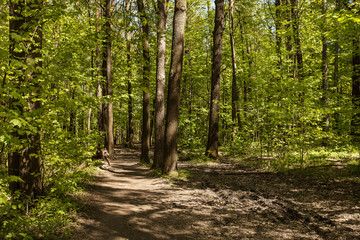 Green forest with path