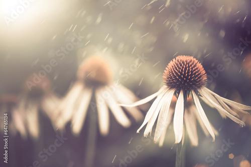 Aluminium Bloemenwinkel summer flower under rain
