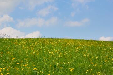 Blumenwiese und Himmel
