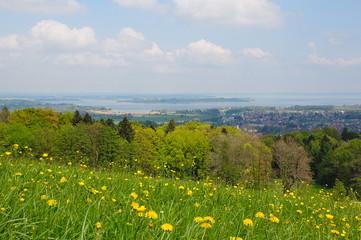 Blumenwiese im bayrischen Voralpenland