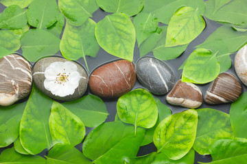 Striped stones with flower in water among the leaves
