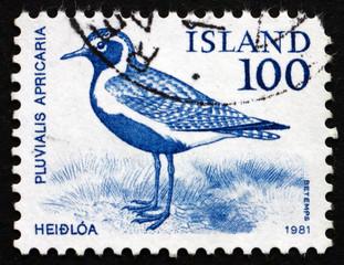Postage stamp Iceland 1981 Golden Plover, Bird