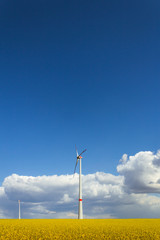 Wind turbines generating wind energy - oilseed field - blue sky