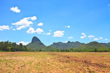sugar cane field near a mountain and blue sky