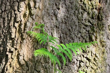 Small fern with bark background
