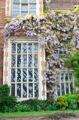 large tudor window with wisteria