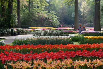 Tuli garden in Keukenhof, Holland