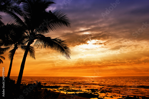 Foto op Canvas Zonsondergang Hawaiian sunset with tropical palm tree silhouettes
