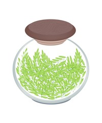 A Jar of Cereal Plant of Green Rice