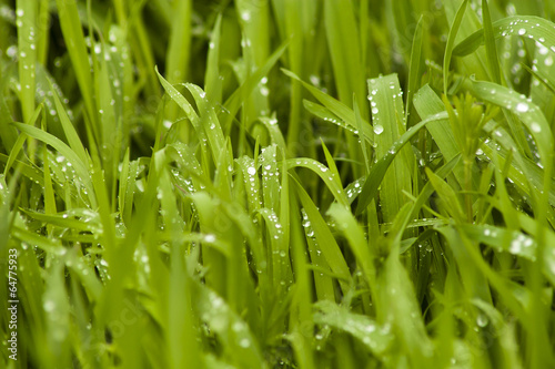 Verbeugung für Regenschein