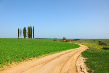 Rural dirt road between green fields