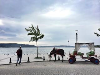 At Arbası