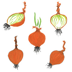 Set of hand drawn onion images. Gouache painting of shallot bulb