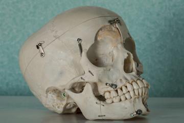 Denti e nervi