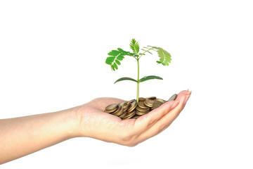hand holding a tree growing on coins / csr