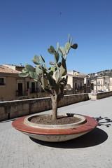 Pianta di fico d'India - Sicilia