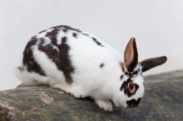 rabbit climbing down a trunk