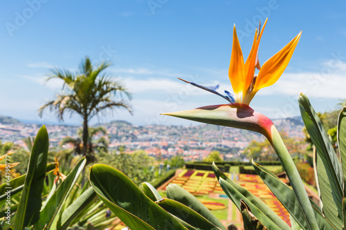 Aluminium Palm boom Strelitzia in Botanical garden of Funchal at Madeira Island