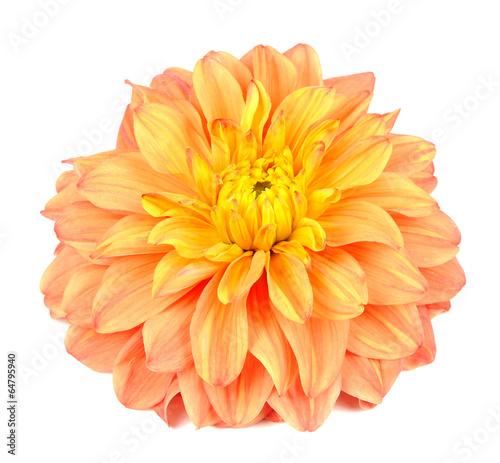 Fotobehang Dahlia Beautiful Orange Dahlia Isolated on White Background