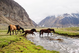 Horses in the mountains - 64796528