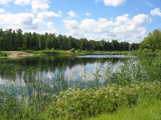 Summer landscape: pond in the park