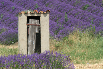 valensole provenza francia campi di lavanda fiorita