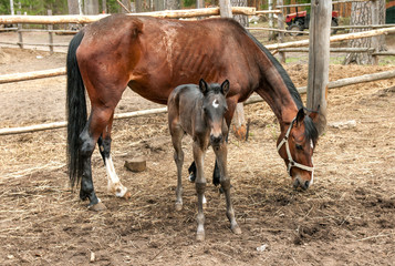 horse and its foal standing
